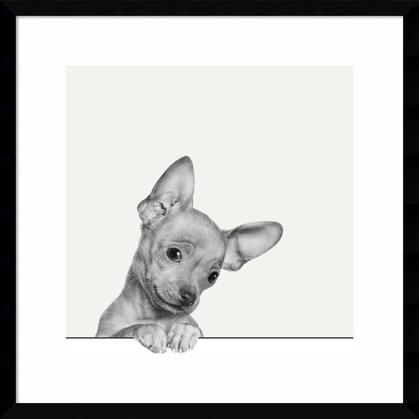 Framed Art Print 'Sweet Chihuahua Dog' by Jon Bertelli 21 x 21-inch