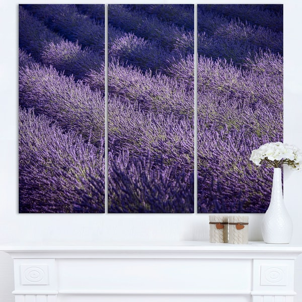 Lavender Field and Ray of Light - Oversized Landscape Wall Art Print 19665169