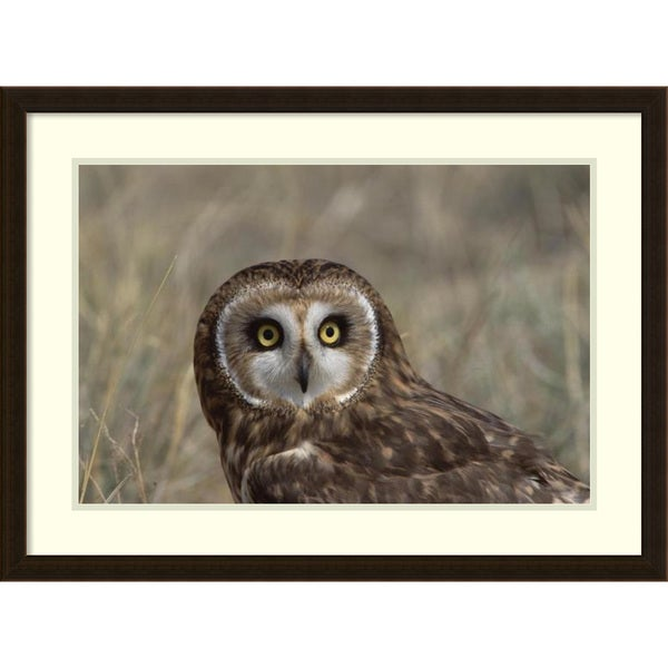 Framed Art Print 'Short-eared Owl portrait, North America' by Konrad Wothe 31 x 23-inch
