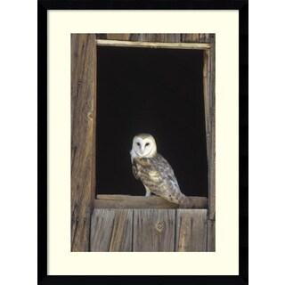 Framed Art Print 'Barn Owl perching on barn window, North America' by Konrad Wothe 17 x 23-inch