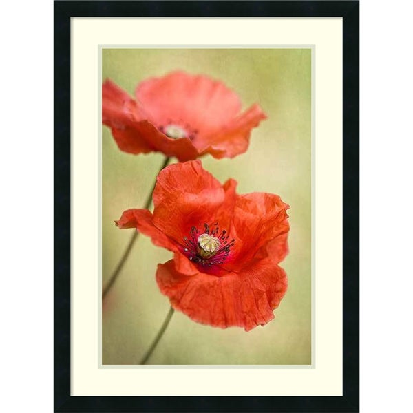 Framed Art Print 'Papaver Passion (Poppies)' by Mandy Disher 23 x 31-inch 19764925