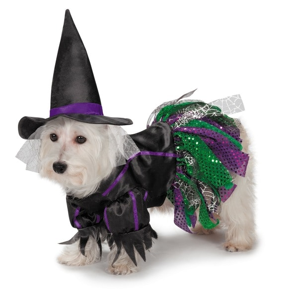 Zack & Zoey Scary Witch Dog Costume