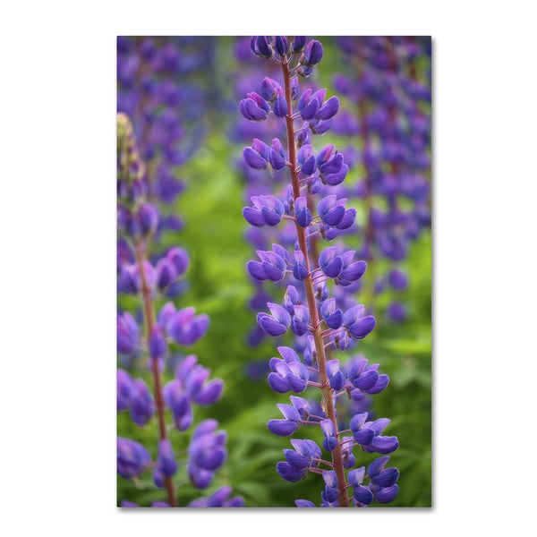 Cora Niele 'Blue Violet Lupine Flower' Canvas Art