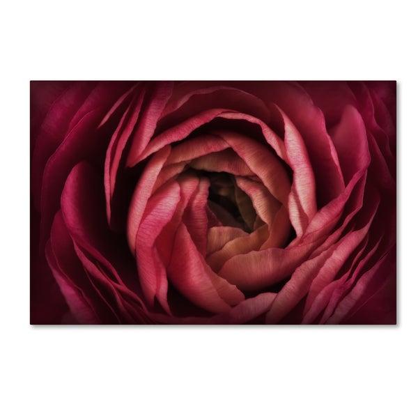 Cora Niele 'Glowing Ruby Red Ranunculus' Canvas Art