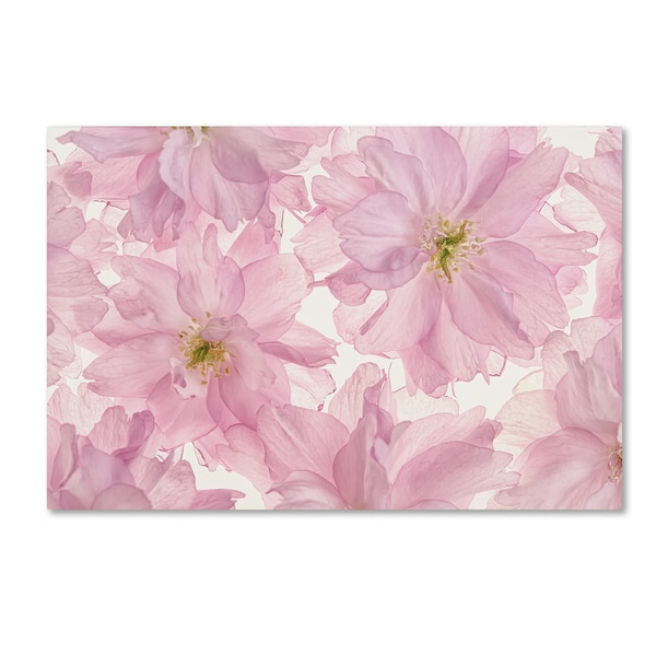 Cora Niele 'Pink Cherry Blossom' Canvas Art