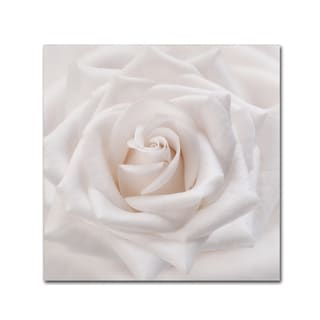 Cora Niele 'Soft White Rose' Canvas Art