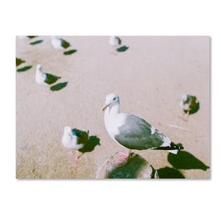 Ariane Moshayedi 'Seagull Closeup' Canvas Art