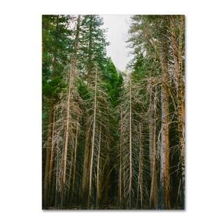 Ariane Moshayedi 'Tree Forest' Canvas Art