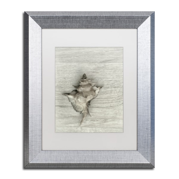 Cora Niele 'Murex Shell' Matted Framed Art