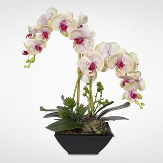 Real Touch Phalaenopsis Silk Orchids with Succulents in Metal Pot