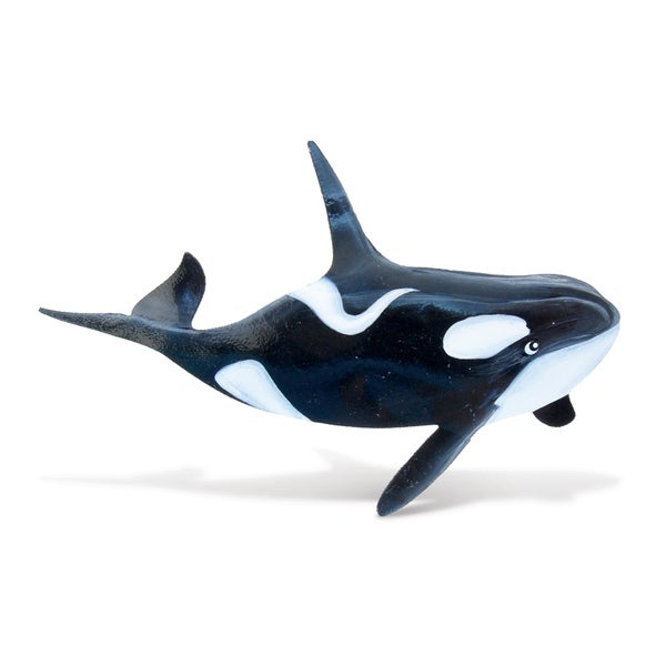 Black/White Plastic Killer Whale Bobble Metal Magnet