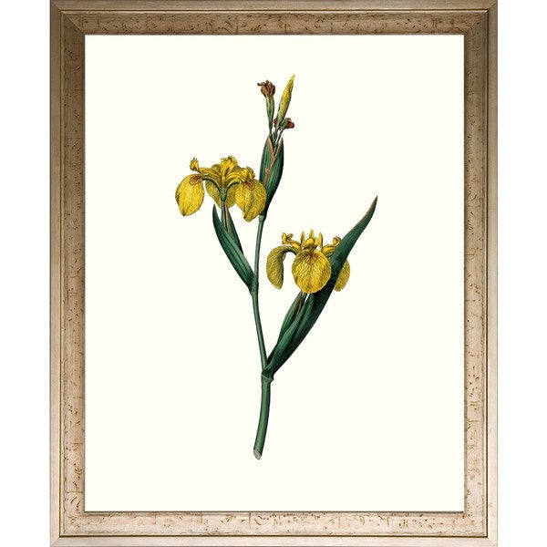 The Botanical Magazine 'Floral Studies' Framed Art Print