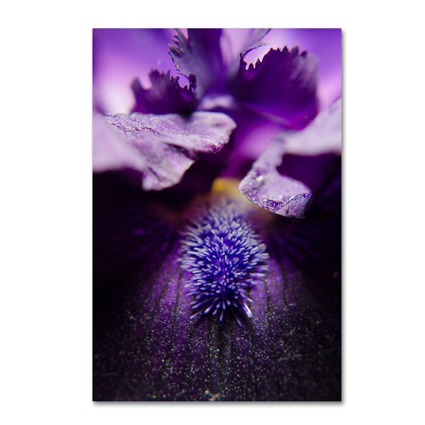 PIPA Fine Art 'Stigma of Iris' Canvas Art