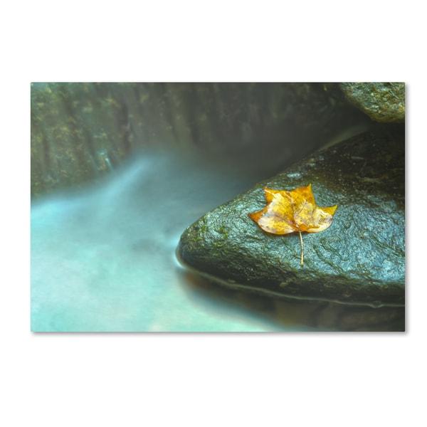 PIPA Fine Art 'Misty Leaf' Canvas Art 20543594