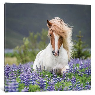 iCanvas Trotting Icelandic Horse II, Lupine Fields, Iceland by Panoramic Images Canvas Print