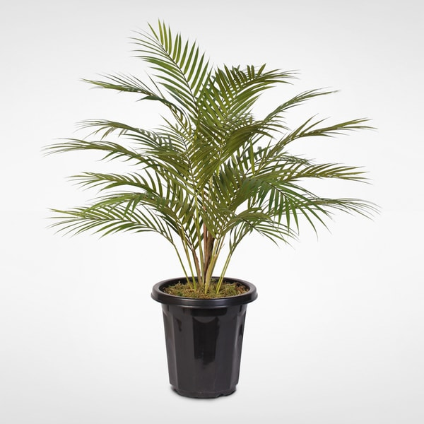 Artificial Areca Palm Plant in a Small Pot