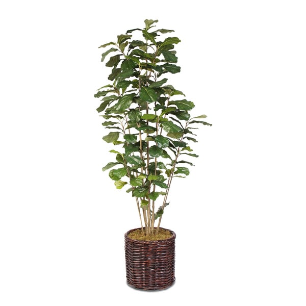 Artificial Fiddle Leaf Tree in a Willow Basket
