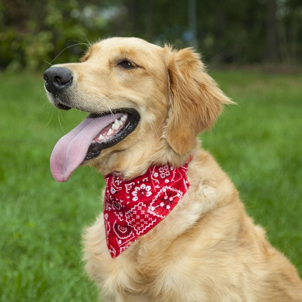 LucyBelle Cotton and Nylon Bandana Dog Collar