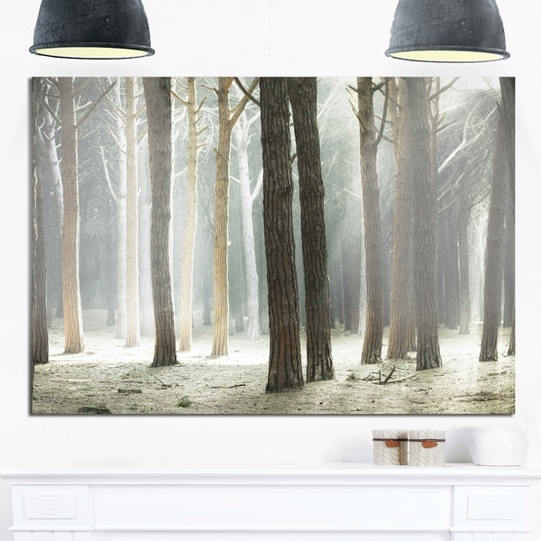Maritime Pine Tree Forest with Rays - Oversized Forest Glossy Metal Wall Art 21035440