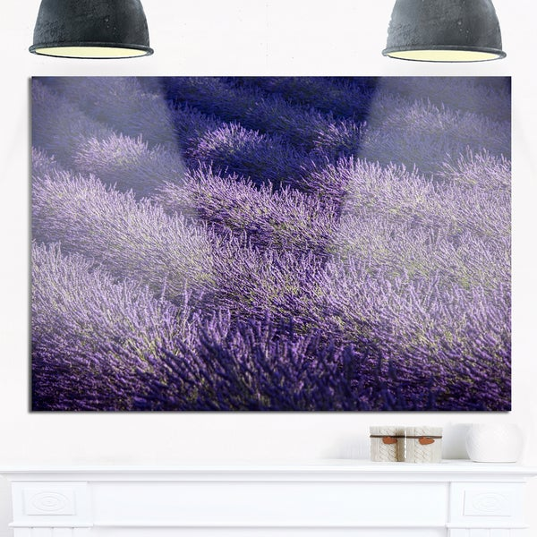 Lavender Field and Ray of Light - Oversized Landscape Glossy Metal Wall Art 21038542