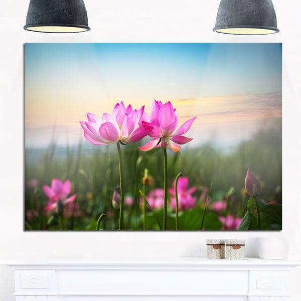 Blooming Lotus Flowers at Sunset - Floral Photo Glossy Metal Wall Art