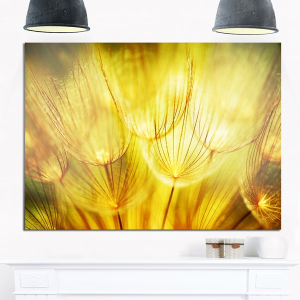 Soft Yellow Dandelion Flowers - Floral Photography Glossy Metal Wall Art