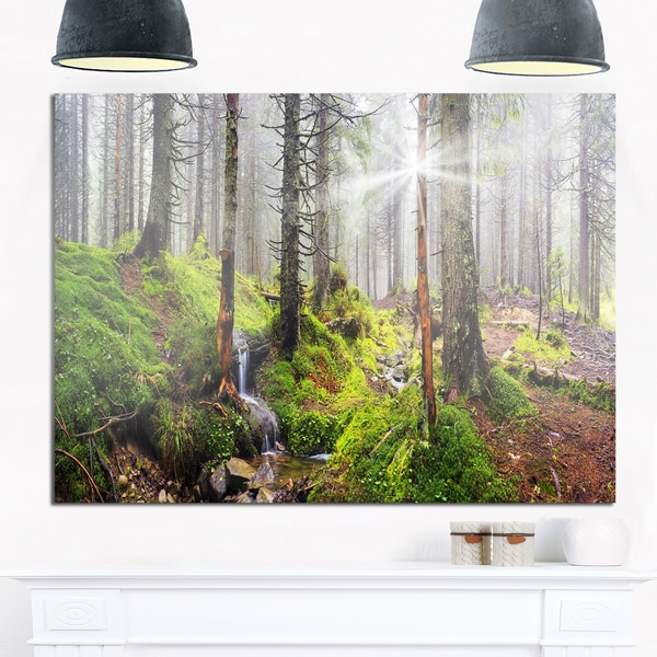 Bright Green Carpathian Forest - Landscape Photo Glossy Metal Wall Art