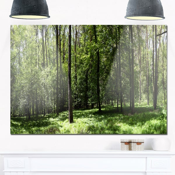 Wild Green Forest Panorama - Oversized Forest Glossy Metal Wall Art