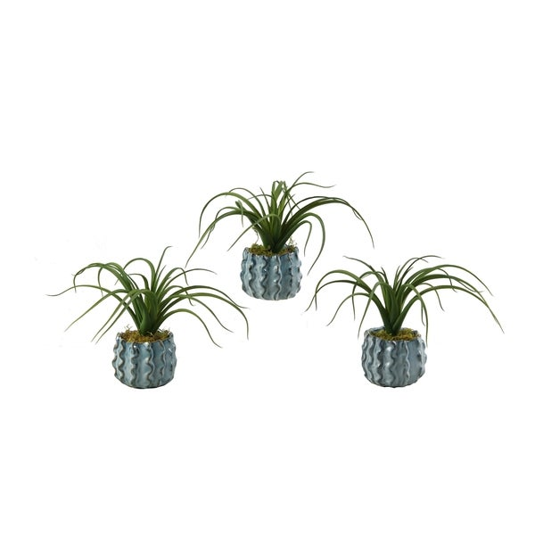 D&W Silks Set of 3 Spider Tillandsia in Ceramic Planter