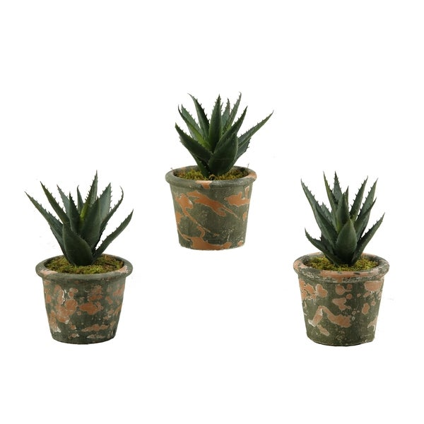 D&W Silks Set of 3 Aloe Plants in Terra Cotta Pots
