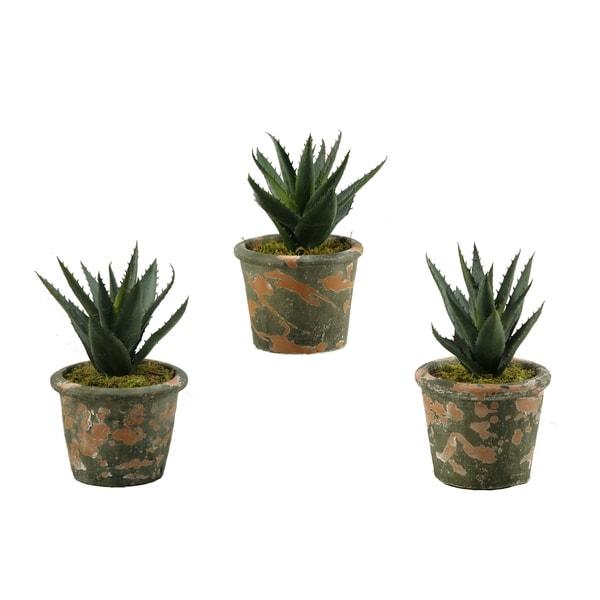 D&W Silks Set of 3 Aloe Plants in Terra Cotta Pots