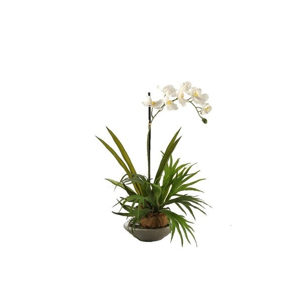 D&W Silks Mini Staghorn fern with Cream Vanda Orchid in Silver and Gun Metal Ceramic Planter