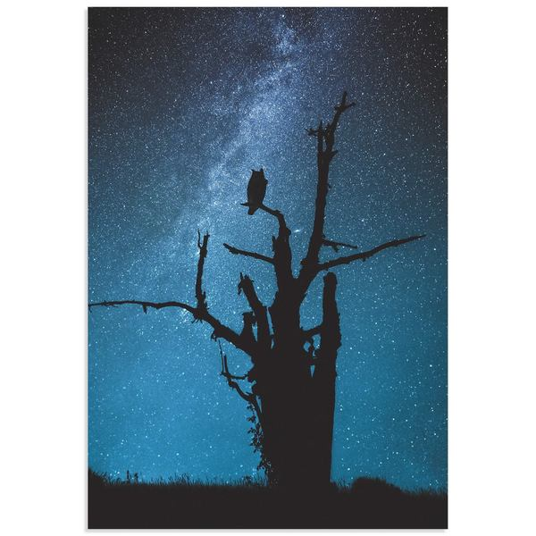 Manu Allicot 'Alone in the Dark' Owl Wall Art on Metal or Acrylic