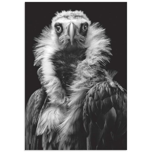 Henrik Spranz 'His Eminence the Vulture' Vulture Wall Art on Metal or Acrylic
