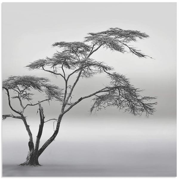 Piet Flour 'A Very Long Story' Minimalist Tree Art on Metal or Acrylic