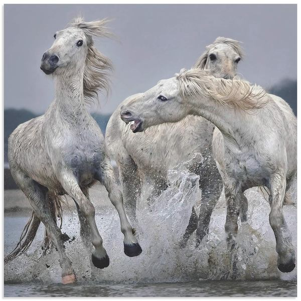 Paul Keates 'White Horse on Water' Horse Art on Metal or Acrylic