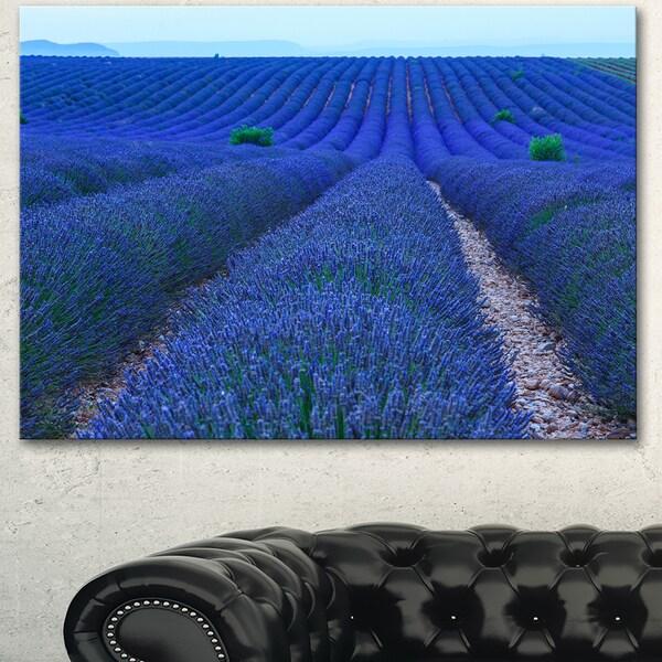 Lavender Field Sunset Near Valensole - Large Floral Canvas Art Print