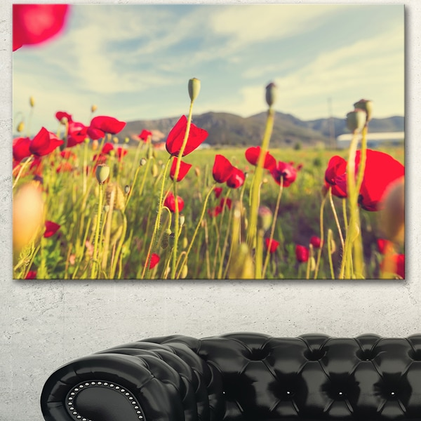 Wild Red Poppy Flowers in Field - Large Flower Wall Artwork
