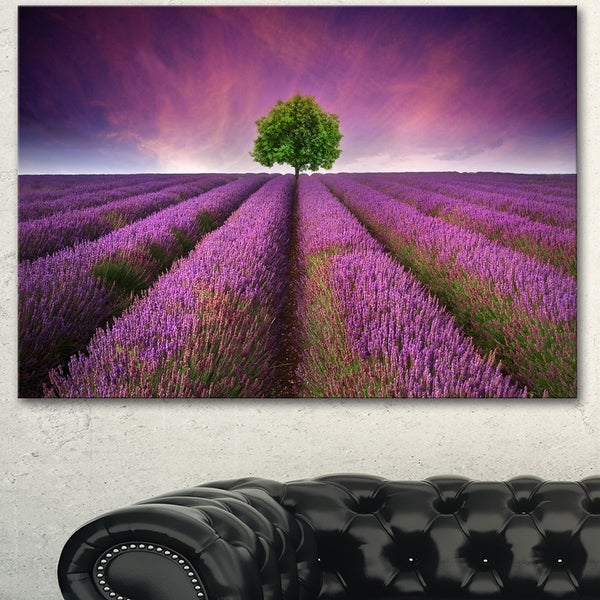 Designart 'Lavender Field Sunset with Single Tree' Large Floral Canvas Art Print