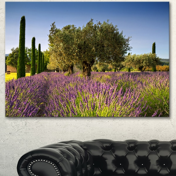 Designart 'Beautiful Lavender and Olive Trees' Large Flower Canvas Wall Art