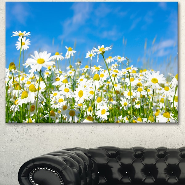 Designart 'White Daisies under Bright Blue Sky' Extra Large Floral Canvas Art