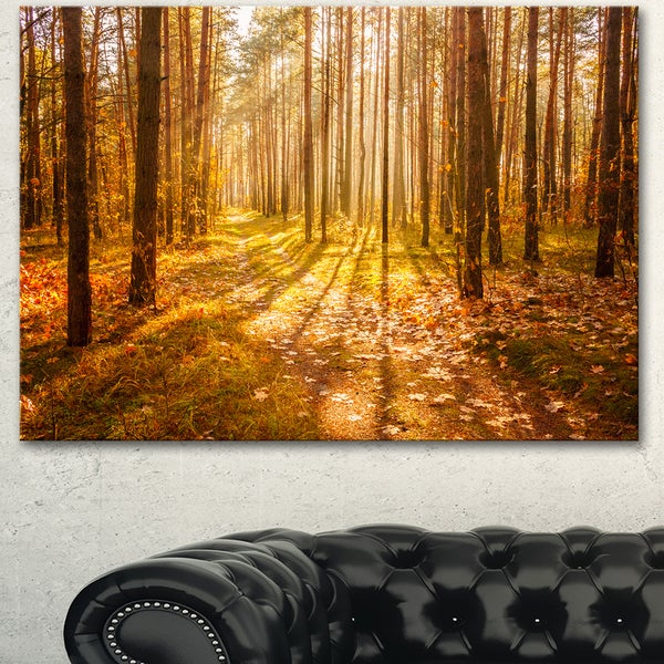 Designart 'Bright Sunlight in Yellow Fall Forest' Modern Forest Canvas Art 21773009