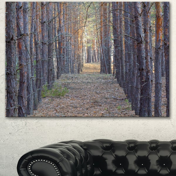 Designart 'Slender Pine Tree Forest Photography' Modern Forest Canvas Art
