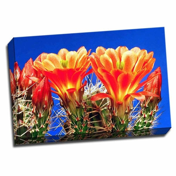 Picture It on Canvas 'Claret Cups on Blue I' 24-inch x 16-inch Wrapped Canvas Wall Art