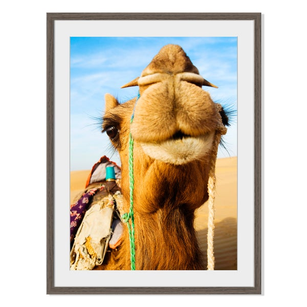 Happy Camel, Framed Paper Print