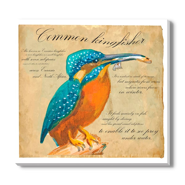 Common Kingfisher, Canvas Gallery Wrap