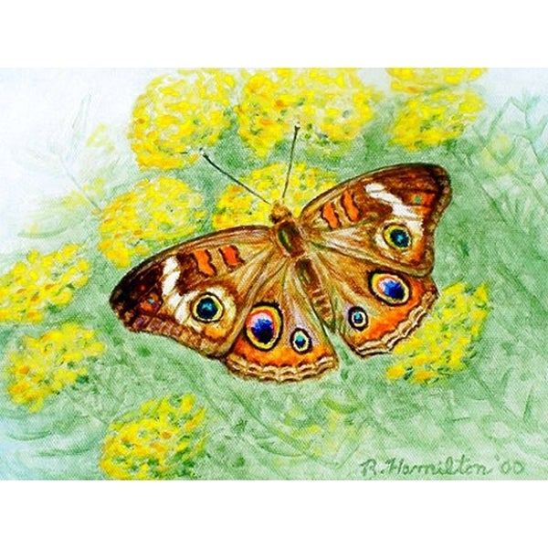 Buckeye Multicolored Polyester Butterfly Place Mat (Pack of 4)