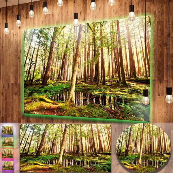 Designart 'Dense Trees in Green Rain Forest' Oversized Landscape Photography on Aluminium