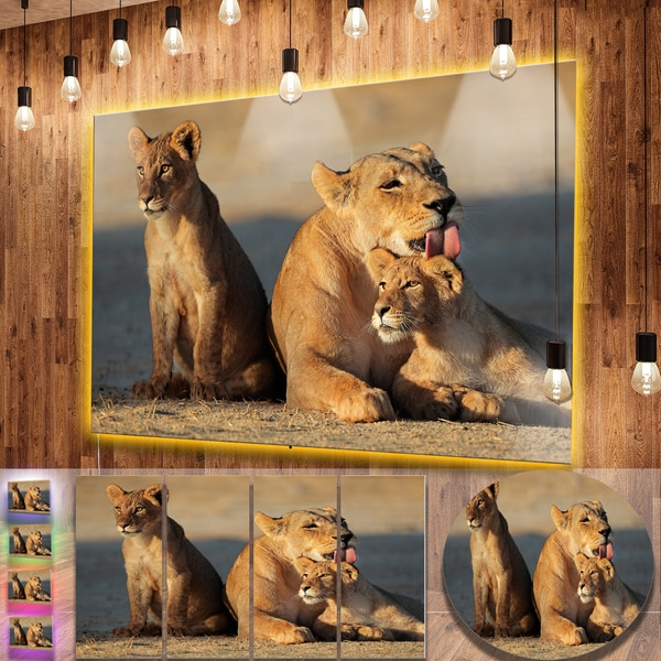 Designart 'Lioness with Cubs Taking Relax' African Animals Metal Wall Decor