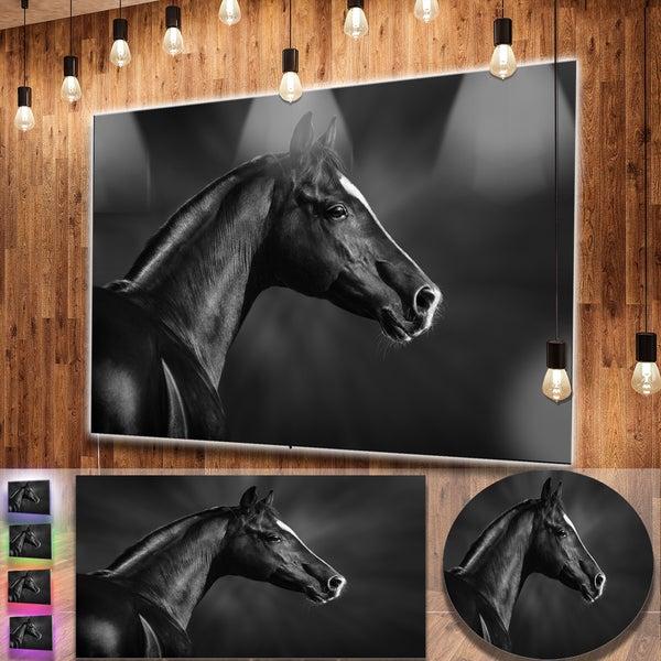 Designart 'Black Arabian Horse Portrait' Extra Large Animal Metal Wall Art